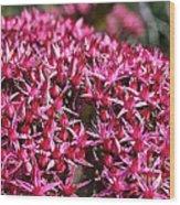 Pink Starz Wood Print