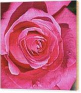Pink Sunrise Rose Wood Print