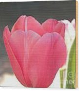 Pink Tulip Beginning Wood Print