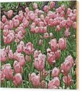 Pink Tulips 2 Wood Print