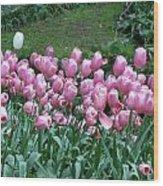 Pink Tulips 3 Wood Print