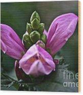 Pink Turtlehead Wood Print