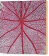 Pink Veins Wood Print
