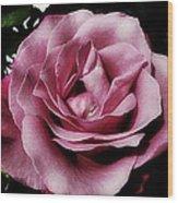 Pink Velour Wood Print