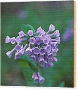 Pink Virginia Bluebells 1c Wood Print