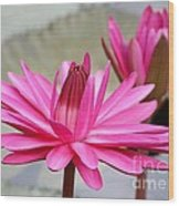 Pink Water Lily Duo Wood Print