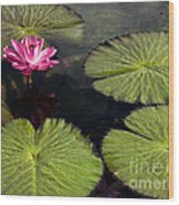 Pink Water Lily I Wood Print