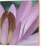 Pink Water Lily Macro Wood Print