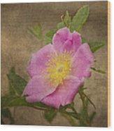 Pink Wild Rose Wood Print
