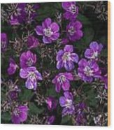 Pinkish-purple Wildflowers Geranium Wood Print
