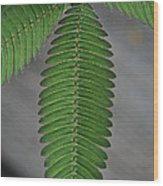 Pinnate Wood Print