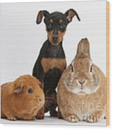 Pinscher Puppy With Rabbit And Guinea Wood Print