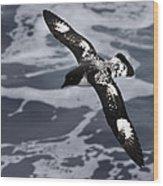 Pintado Petrel - Ancient Mariner Wood Print
