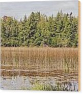 Pintail Pond3 Wood Print