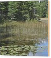 Pintail Pond4 Wood Print