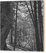 Pintail Trail2 Wood Print