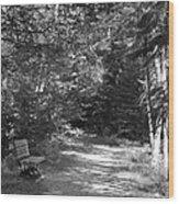 Pintail Trail3 Wood Print