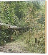 Pinwheel Wood Print
