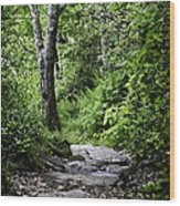 Pisgah Path Wood Print