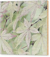 Pistachio Maple Wood Print by David Lade