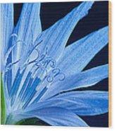 Pistil's Of Chicory Wood Print