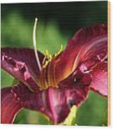 Pistons Of The Pink Yellow Lily Wood Print