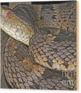 Pit Viper Wood Print