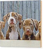 Pitbull Puppies Wood Print