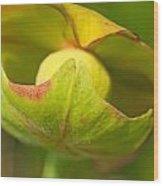 Pitcher Plant Flower Wood Print