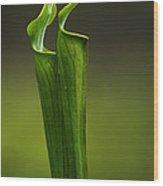 Pitcher Plants 2 Wood Print