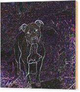 Pitty In Purple  Wood Print