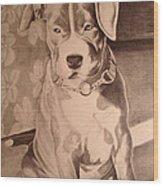 Pitty Pet Portrait Wood Print by Yvonne Scott