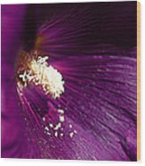 Pixie Dust Wood Print