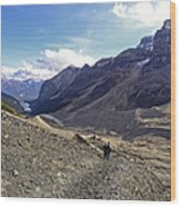 Plain Of Six Glaciers Trail - Lake Louise Canada Wood Print