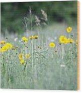 Plains Yellow Daisy Wood Print