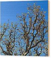 Plane Tree In Autumn Wood Print