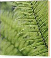 Plant Detail, Close Up Wood Print
