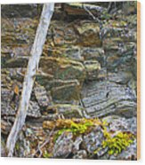 Plant Life On Rocky Canadian Lake Shore Wood Print