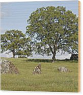 Pleasant Hillside Wood Print