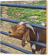 Please Exonerate Me - Billy Goat Wood Print