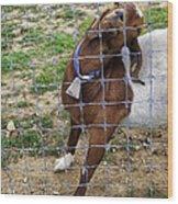 Please Exonerate Me 2 - Billy Goat Wood Print