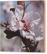 Plum Blossoms 10 Wood Print