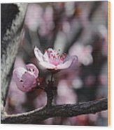 Plum Blossoms 9 Wood Print
