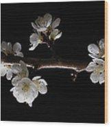 Plum Tree Spring Blossum Wood Print