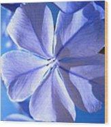 Plumbago Flowers Wood Print by Catherine Natalia  Roche