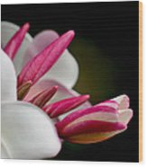 Plumeria In The Wind Wood Print