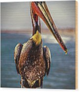 Plump Peter Pelican's Pier Photo Pose Wood Print