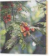 Poinciana Blossoms Close-up V2 Wood Print