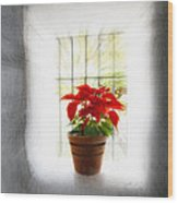 Poinsettia In Window Light Wood Print