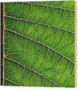 Poinsettia Leaf IIi Wood Print